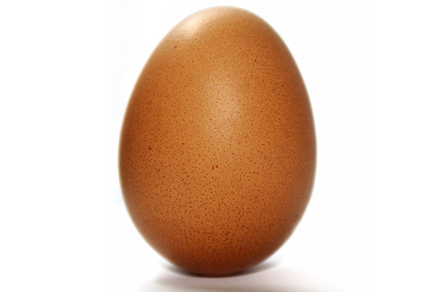 La coquille d'œuf: un mystère à élucider