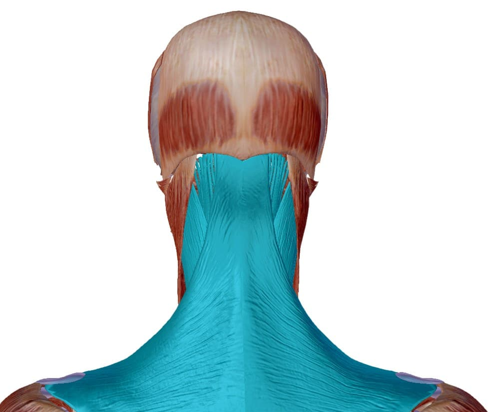 Chimie_naturelle - pierre de soufre contre maux de tête, céphalées et migraines - chaine musculaire de la nuque