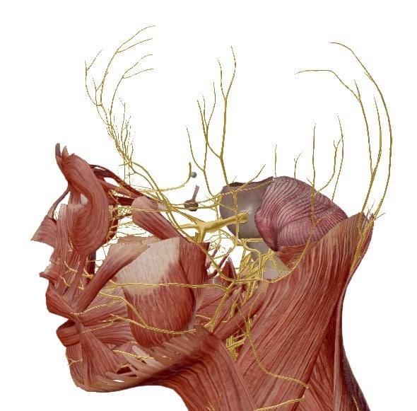 Chimie_naturelle - pierre de soufre contre maux de tête, céphalées et migraines - système nerveux