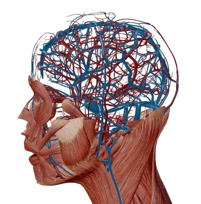 Chimie_naturelle - pierre de soufre contre maux de tête, céphalées et migraines - système sanguin