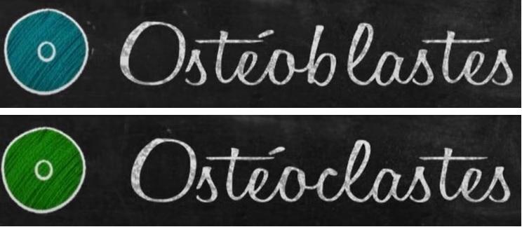 La Chimie_Naturelle du Corps Humain - ostéopénie et ostéoporose - ostéoblastes et ostéoblastes