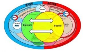 chimie-naturelle-calcium-soufre